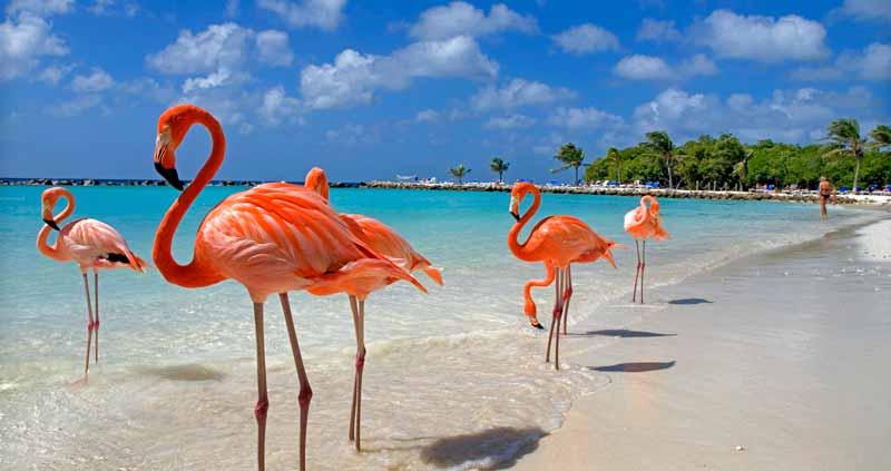 aruba-voyages-caraibes