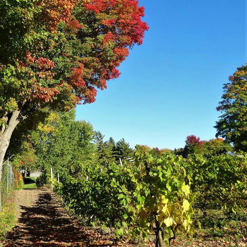 vignobles-montreal-quebec-vin-sorties-cidrerie