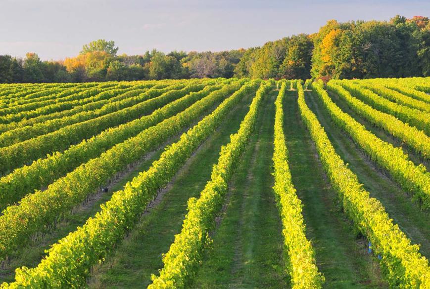 vignoble-riviere-du-chene-montreal-vins-quebec