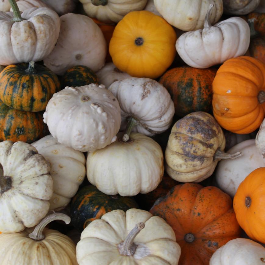 automne-citrouilles-monteregie-quoi-faire-activites-vins-vignobles-quebec