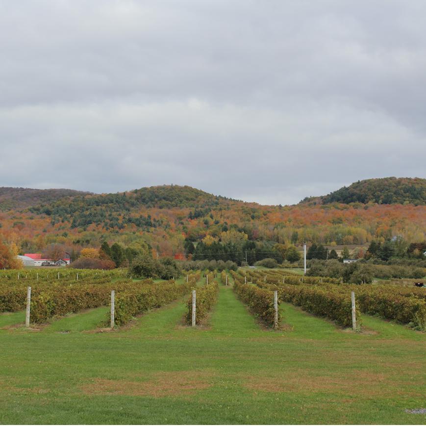 domaine-lavoie-vignole-monteregie-vins-quebec
